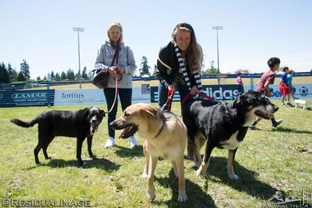 Dogs At The Football: Bark at the 'Bird 2016