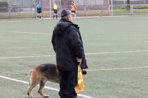 Dogs At The Football: BC Provincial Cup Dogs 2016