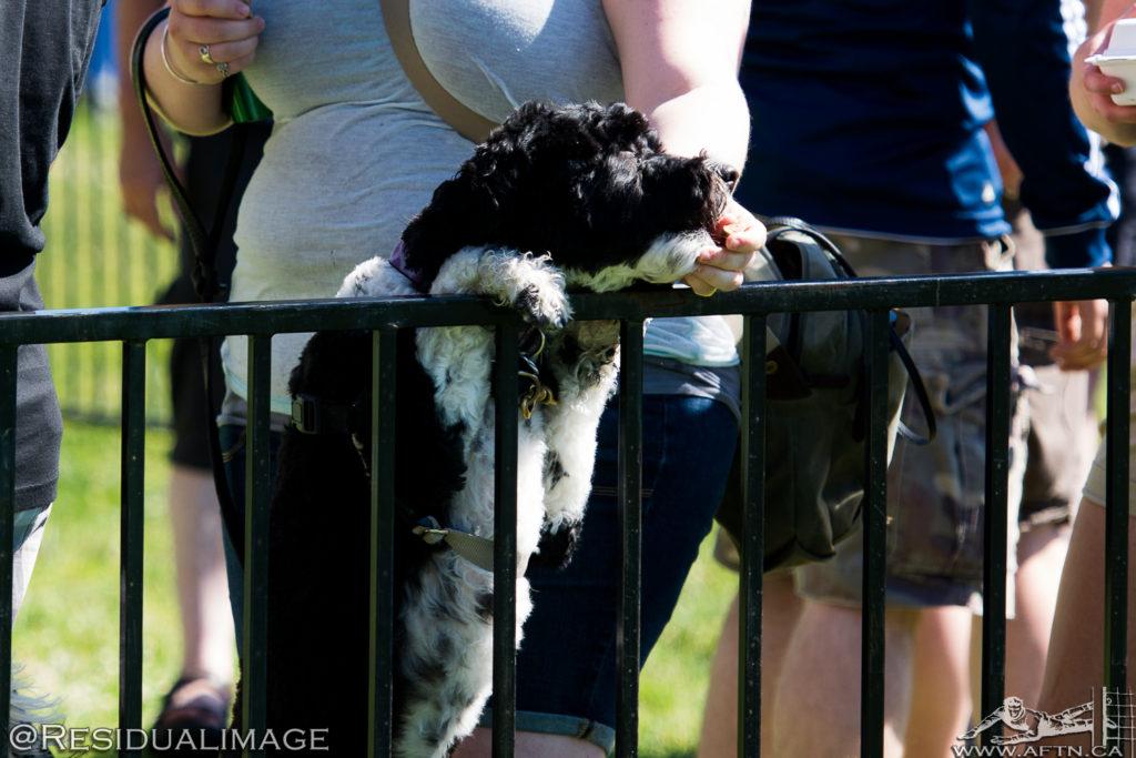 vancouver-whitecaps-bark-at-the-bird-2015-9